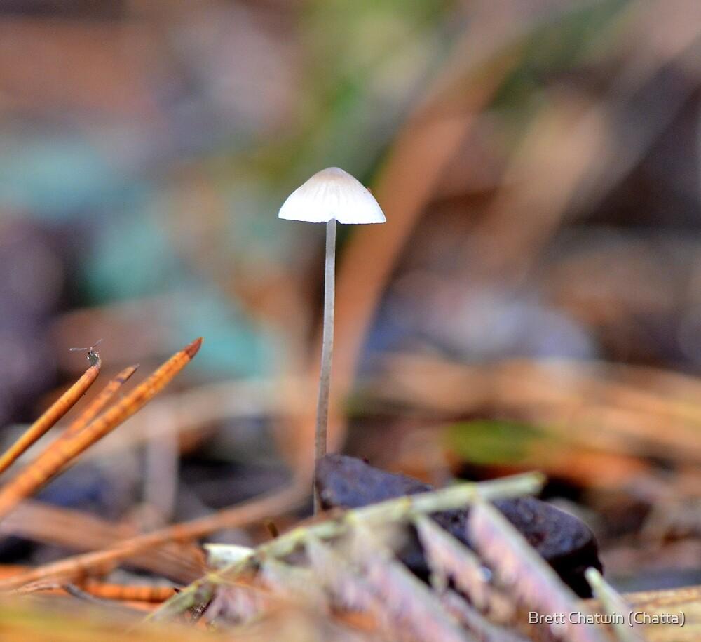 Delicate Fungi by Brett Chatwin (Chatta)