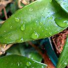 """""""Thank you for the rain...!"""" by Irene  van Vuuren"""