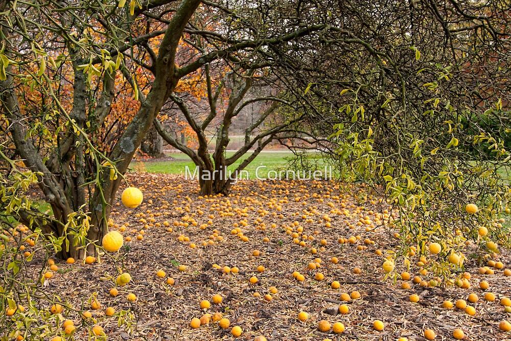 Autumn's Fruit by Marilyn Cornwell