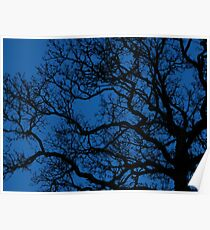tree sihouette on royal blue night sky Poster