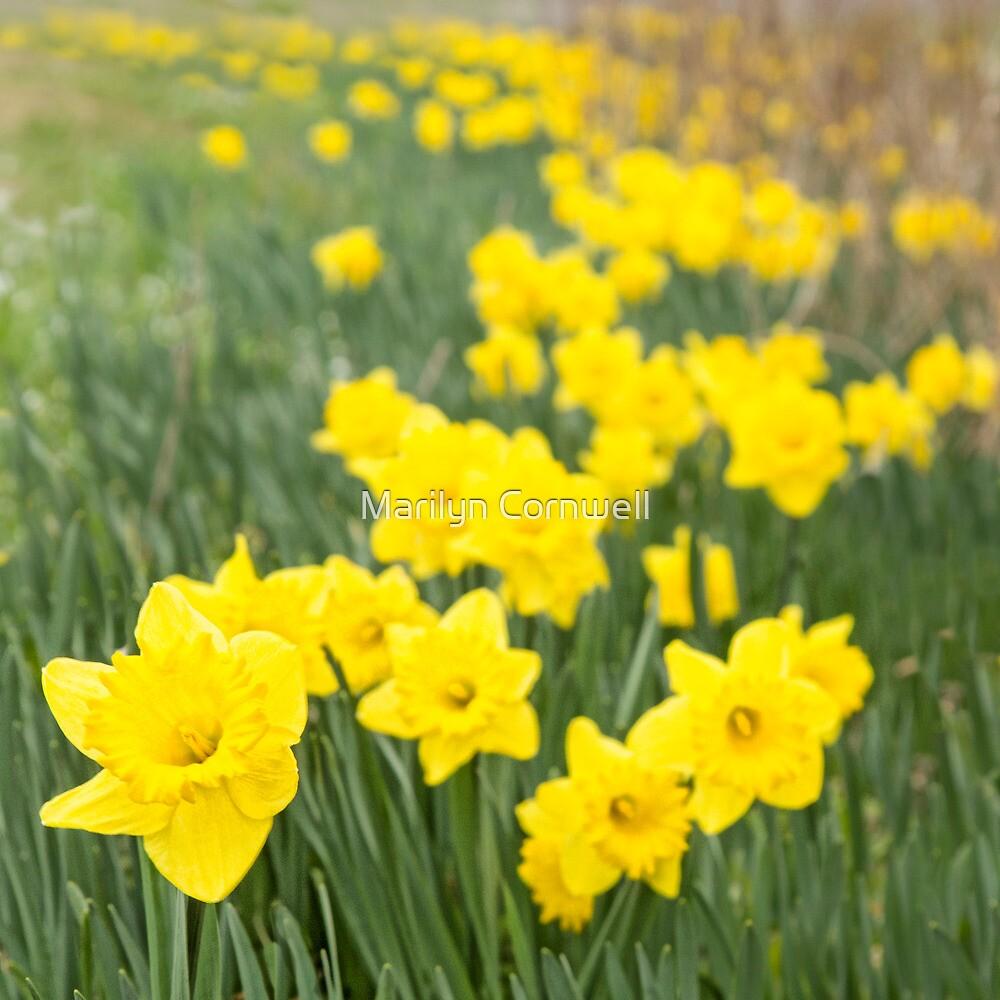 A Host of Golden Daffodils by Marilyn Cornwell