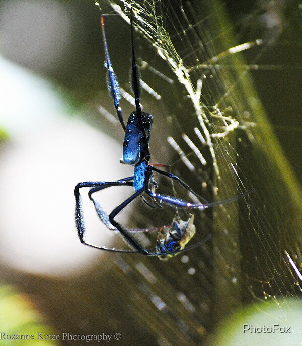 Spider  by PhotoFox