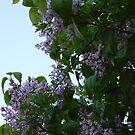 Purple Flowers by JenaHall