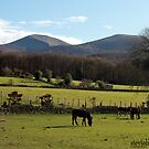Mourne Mountains by stevieblack