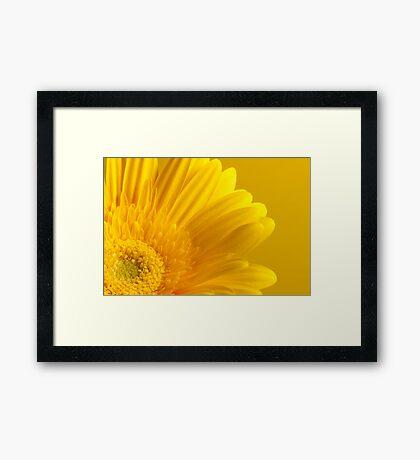 Gerbera 12 Framed Print