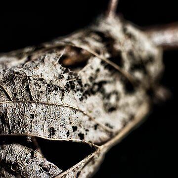 Leaf Skeleton II by InspiraImage