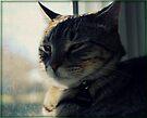 Back Away Slowly, And Put The Camera Down... by jodi payne