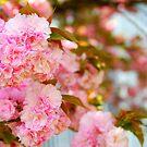Got Pink? by Sunshinesmile83