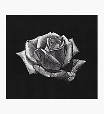 Scratchboard Rose  Photographic Print