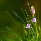 The First Bluebells by Martin Griffett