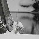 Beaver's Frozen Dinner by Anthony Roma