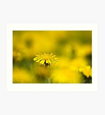 Yellow Dandelion Art Print