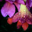 Trumpet Vine Flower, After a Shower  by Heather Friedman
