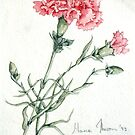 Single Carnation by Marie Theron