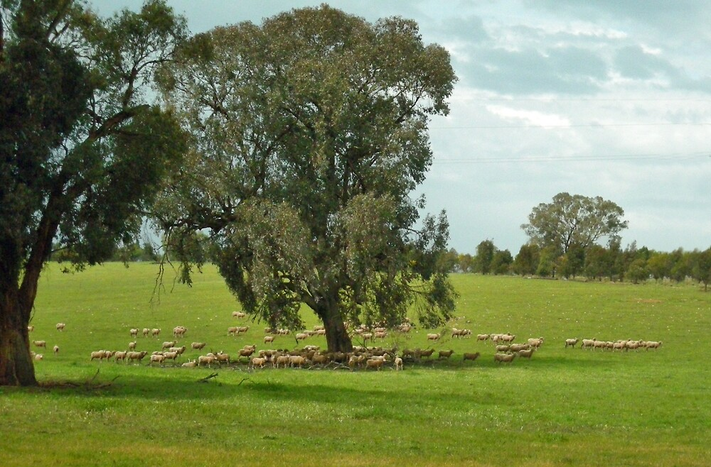 Temora, New South Wales by V1mage