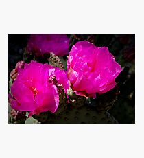 Prickly Pear Cactus - Red Photographic Print