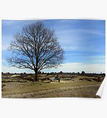 Enjoy the landscape in Spring Poster
