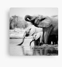 Namibia: Elephants Canvas Print
