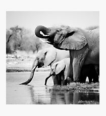 Namibia: Elephants Photographic Print