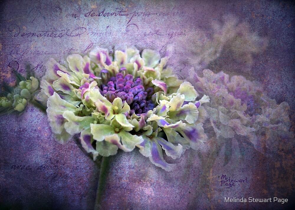 """ Lavender & Lace"" by Melinda Stewart Page"