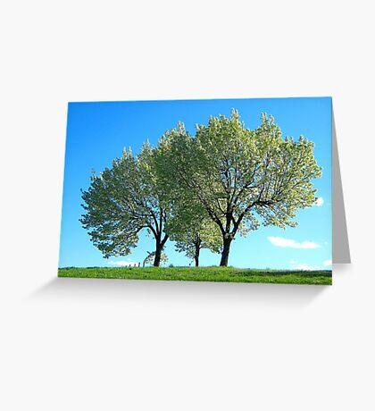 Spring trees, New York City  Greeting Card