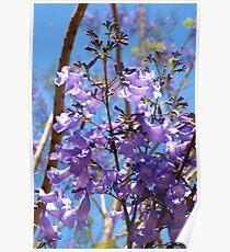 Purple on blue Poster