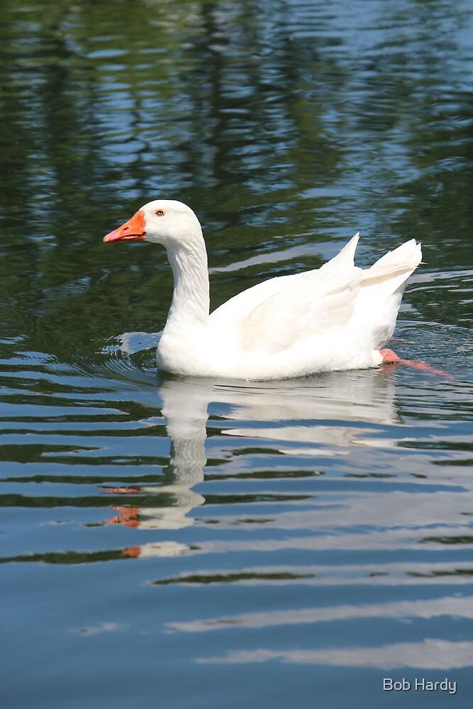 Embden Goose by Bob Hardy
