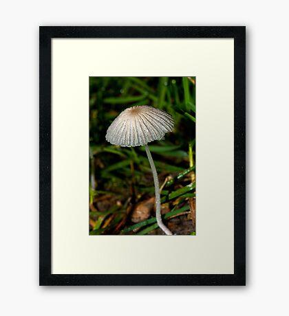 A Mushroom Framed Print