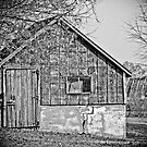 The Little Old Shed  by Marcia Rubin