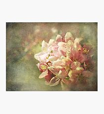 Full Bloom Photographic Print