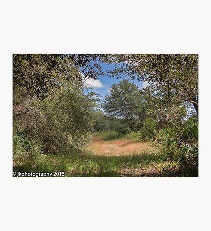 Meadow at Jelks Preserve  Photographic Print