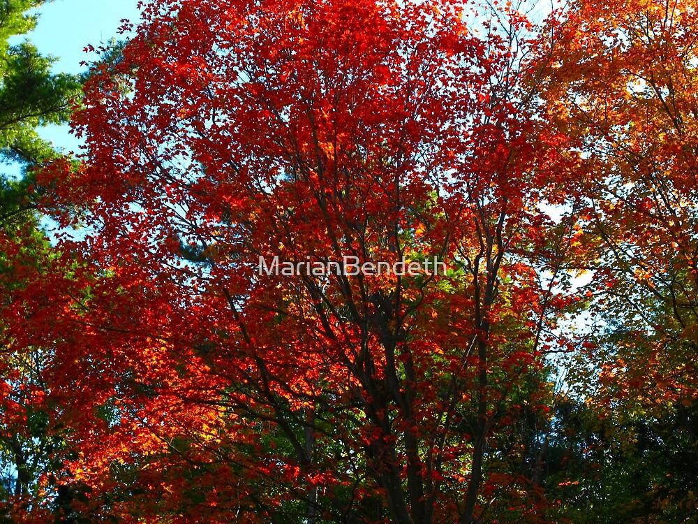 Kickstarting Autumn with a bang by MarianBendeth