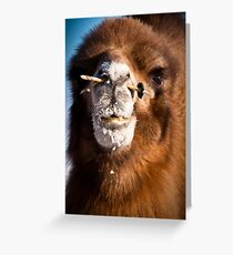 Bactrial camel Greeting Card