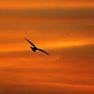 An early morning raptor by EnviroKey
