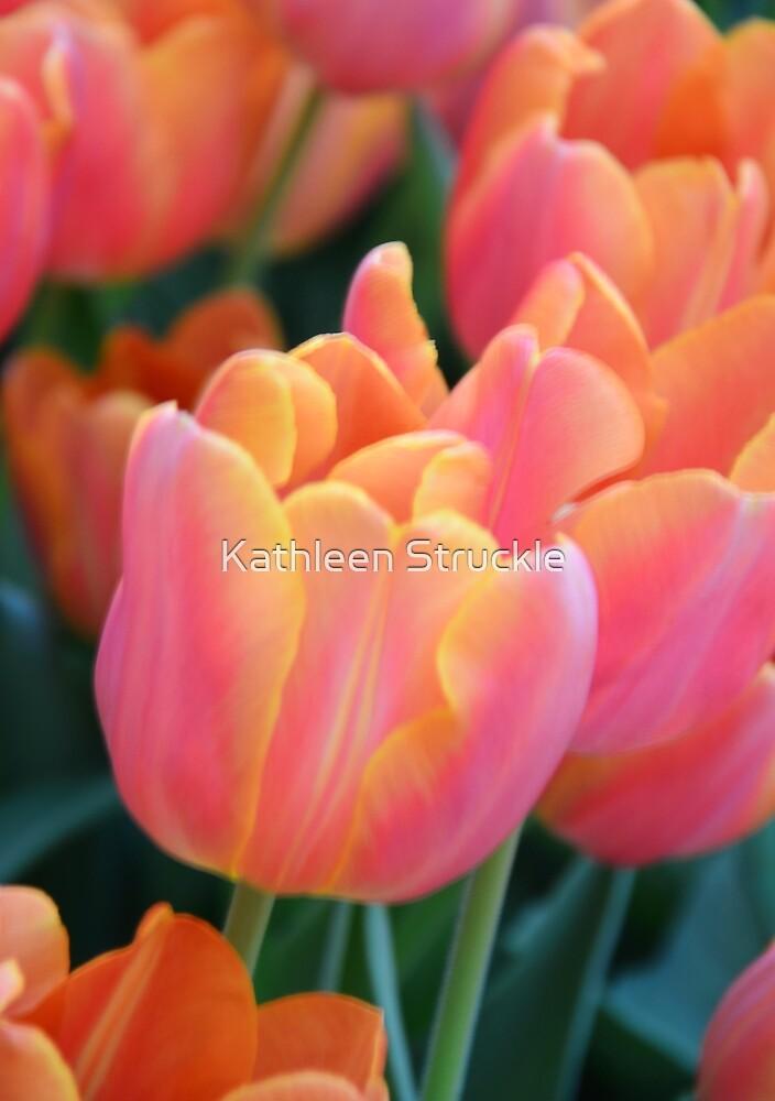 Light Orange Tulips by Kathleen Struckle