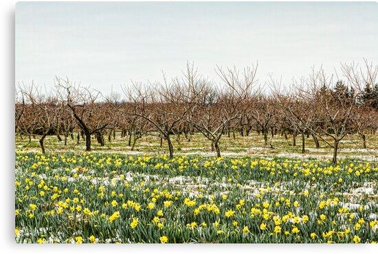 Spring Thaw by Marilyn Cornwell