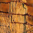 """Bush Boundary"" by jonxiv"