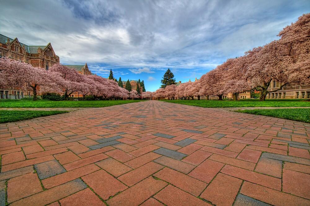 Full Bloom by Dan Mihai