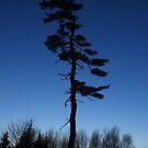 Lone Tree in Blue by Don Rankin