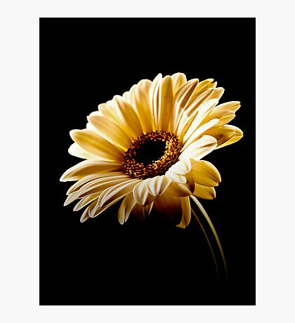 Floral Highlights Photographic Print