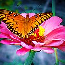 Welcoming Spring/Butterfly and flower by Sandra Russell