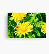 Dandelion and insect Canvas Print