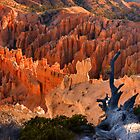 Bryce Canyon At Sunrise by Stephen Vecchiotti