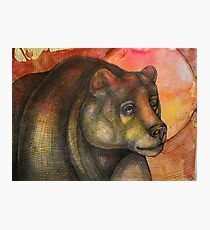 Ursine Photographic Print