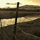 FENCE LINE by Barbara Morrison