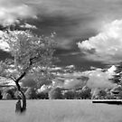 The Phoenix Park in Infra-Red by Dave  Kennedy