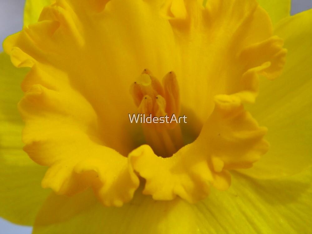 DaffoDILLY by WildestArt