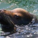 Seal by zzsuzsa