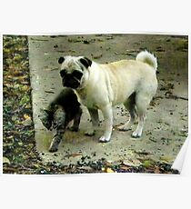 Showing The Way /Kitten and Pug  Poster