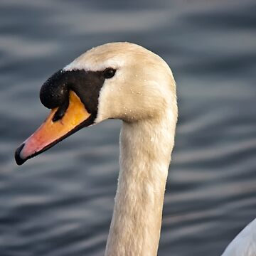 Swan in portrait by InspiraImage